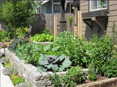 front yard landscaping landscaping ideas garden makeover edible garden front yards vegetable garden pacific northwest garden ideas backyards