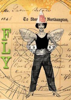 Fly by Jayne Alexander