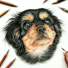 A Pet and Wildlife Pencil Drawing Artist Beautiful dog portrait. Lilly by Angie portrait # Portrait Au Crayon, Pencil Portrait, Animal Drawings, Pencil Drawings, Dog Pencil Drawing, Hipster Drawings, Pencil Sketching, Eye Drawings, Drawing Animals