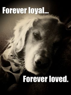 For Joey, Tracy, Cameron and Breann. My heart is heavy today for your loss of a wonderful pet, may you remember all the love and wonderful times with Schilling, Love and Hugs to all of you.