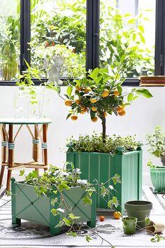 DIY jardin: fabriquer une caisse à oranger - Marie Claire Marie Claire, Diy Jardin, Orange, House Plants, Crafts, Outdoor, Gardens, Diy Planters, Wood Flower Box