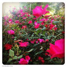 #home #garden #thedecadentmess #blog #alabama