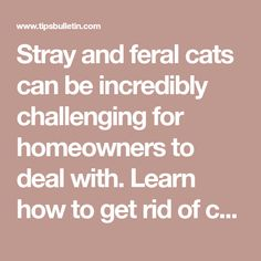 Stray and feral cats can be incredibly challenging for homeowners to deal with. Learn how to get rid of cats with simple and effective methods. Cat Repellant Outdoor, Motion Activated Sprinkler, Catch The Cat, Cat Plants, Citrus Trees, Cat Pee, Oranges And Lemons, Food Out, Feral Cats