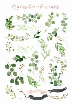 Watercolor Green Leaf Clip Art/Greenery/Small Set/Eucalyptus/Wild Leaf/Spring/Green - New Ideas Watercolor Leaves, Floral Watercolor, Watercolor Paintings, Simple Watercolor Flowers, Drawing Flowers, Watercolor Design, Watercolors, Plants Watercolor, Watercolor Branding