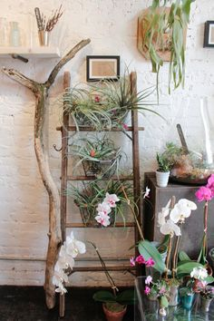 Air plants & orchid display