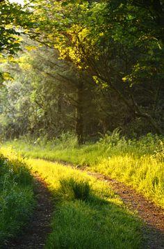Dappled Sunlight ~*~