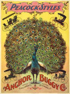 Peacock style buggies.