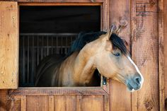 Horse in stable by Elena Elisseeva on 500px