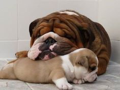 Bulldog Mom and her daughter