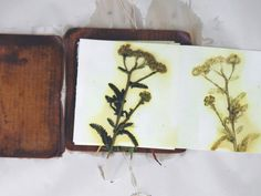 Interested in experimenting with natural dyes? Creating some cool wall-art? This project's for you. (Though you might want to wait for spring to roll around). #villageartsupply