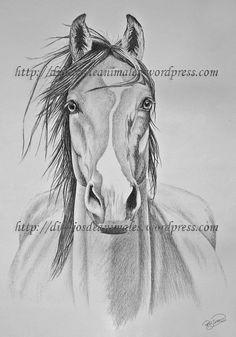 Image result for caballo cabezas