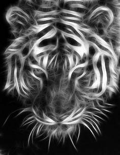 Astonishing Looking White Fractal Tiger. Zbrush, Fractal Images, Fractal Art, Grayscale Image, Photoshop Plugins, 3d Cnc, Tiger Art, Modelos 3d, Fractal Design