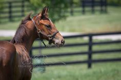 A profile picture of Stephen Got Even's filly at 10 weeks old.