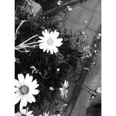 Grace Shelley's Photography