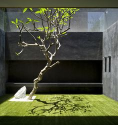 View of a contemporary garden from an Israeli home by Pitsou Kedem Architects. Photo by Amit Geron Photography.