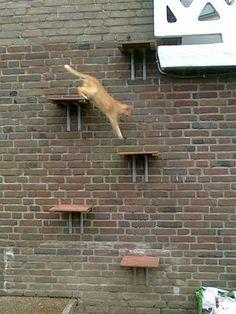 cat ladders!