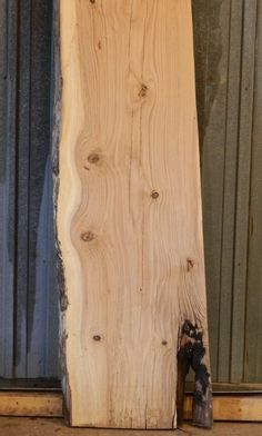 live edge wood slabs   HUGE White Oak Natural/Live Edge Lumber Slab/Wood Bench/Bar Top 20274 ...
