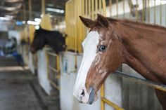 Caring for Senior Horses: What to Remember