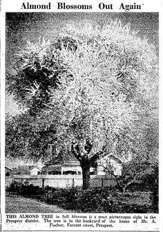 News (Adelaide, SA : 1923 - 1954), Monday 17 July 1933, page 5, Farrant Street, Prospect