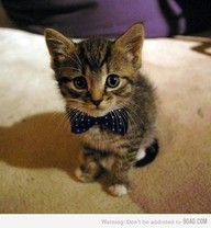 To Do ASAP: Obtain a bow-tie for my cat.