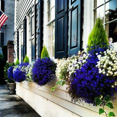 A better view of these lovely flowers in the window boxes South of Broad on Tradd Street in #charleston dunes properties www.dunesproperties.com