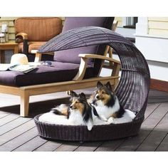 Elegant Canine Outdoor Dog Bed        Deal of the day    http://amzn.to/2bJlH25