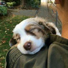 It's very tiring being a little puppy...