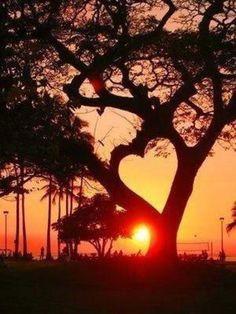 大きな木の枝が創りだした、ハート。 夕焼けに染まるシルエットに、なんだか胸がジーンとします。 懐かしい、あの日の恋を思い出すような、そんな郷愁でしょうか。