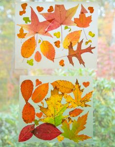 We love this simple craft activity to enjoy the end of fall. Beautiful Autumn Leaf Suncatchers