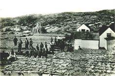 Drying Cod, Newfoundland