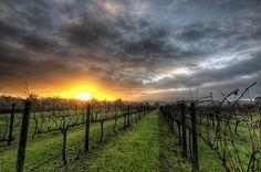 Visit a Vineyard. Done that in Central Otago Vineyard, NZ tour