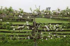 Image result for espalier fencing UK