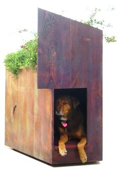 Cool dog house.