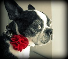 Doggy Carnation Flower-SMALL- More Colors Available. $6.00, via Etsy.