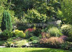 Super-Easy Perennials : Outdoors : Home & Garden Television Garden Shrubs, Garden Plants, Landscape Design, Garden Design, Hillside Landscaping, Landscaping Ideas, Backyard Ideas, Evergreen Shrubs, Garden Living