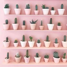 - Cactus - Le cactus et le rose : deux tendances déco qu'on adore pour ajouter une touche . The cactus and the rose: two decorative trends that we love to add a tropical touch to its interior. The cactus inspired us a candle-jewel, Sweet Cactus. Aesthetic Pastel Wallpaper, Aesthetic Wallpapers, Aesthetic Pastel Pink, Pastel Pink Wallpaper, Photo Wall Collage, Picture Wall, Bracelet Fil, Plant Aesthetic, Deco Nature