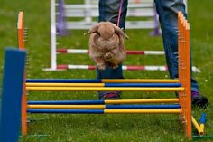 photo from Håkan Dahlström  BOING! great way to keep bunnies fit and healthy!