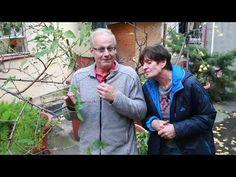 Pěstitelská poradna 6 - kadeřavost - YouTube Gardening, Youtube, Lawn And Garden, Youtubers, Youtube Movies, Horticulture