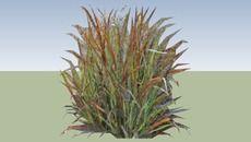 3D Model of cheyenne switch grass