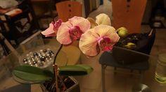 Orquídeas de Olga