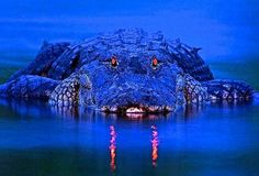 Everglades River Of Grass Adventures - Private Tours