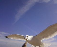 I had the Seagulls ...eating right out of my hands.   SUP!?