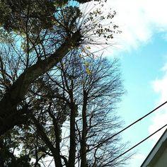 【mysterycherrylavender】さんのInstagramの写真をピンしています。《冬の空💙  樹木とのコントラストが美しい🌿✨ #空 #冬空 #景色 #風景 #木 #樹木 #森 #林 #森林 #scenery #view #tree #sky #cloud #winter #wintersky #forest #japan #JPN #日本 #キレイ #beautiful #wonderful #電線 #屋根 #癒し #和む #cherryichigodoll #チェリードール #大阪》