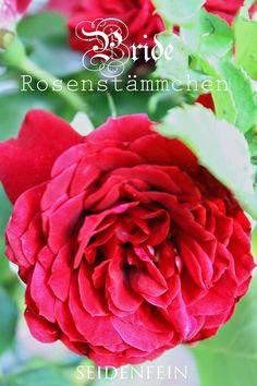 seidenfein 's Dekoblog Dekoblog, Plants, Flowers, Marriage, Flora, Plant