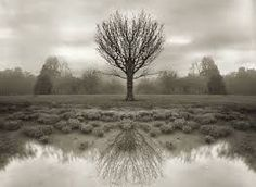 alfred stieglitz landscapes - Google Search