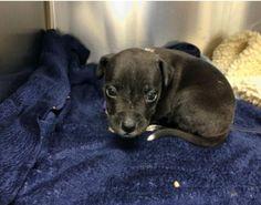 Tiny pup found in alleged drug dealer's pocket