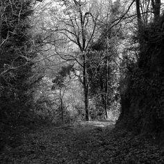 L'altre passeig de gràcia Country Roads, Photos