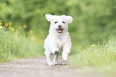 """a dog called """"happy"""" <3  www.sitz-und-blitz.net"""