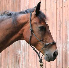 Natural Horsemanship 101 | Your Horse Farm #horses #equestrian #yourhorsefarm #yhf #blog #horseblog #horsemanship #tips