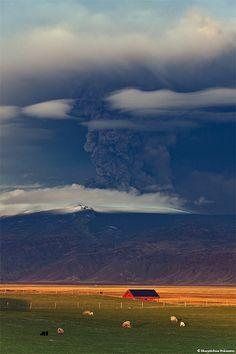 Eyjafjallajökull Erupting Volcano in Iceland - Sheep in Fljótshlíð by skarpi - www.skarpi.is, via Flickr